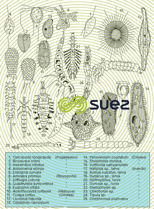 Zooplankton 1