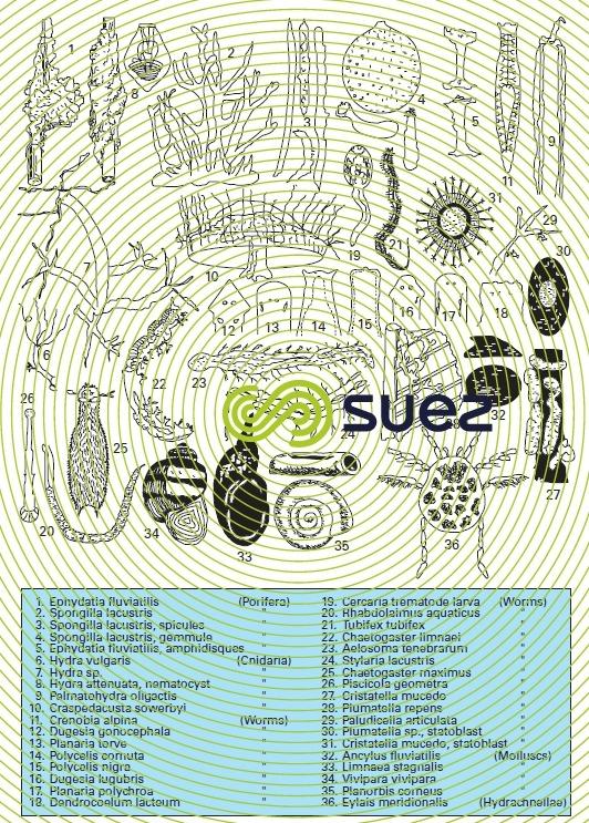 Zooplankton 2