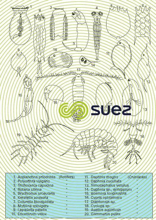 Zooplankton 3