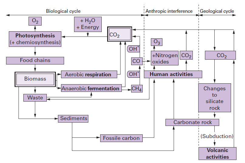 Carbon cycle degremont ccuart Image collections